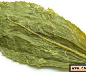 铁观音和其他乌龙茶的叶底对比