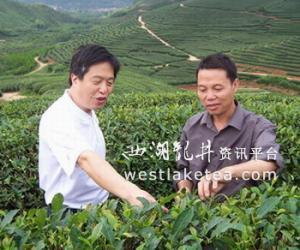 福建:建�T�|游茶�~合作社助推茶�a�I�l展(�D)