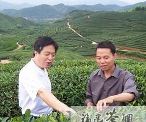 福建建瓯:合作社助推茶产业发展