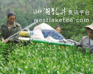 """贵州安顺走现代茶产业之路 """"四轮""""驱动(图)"""