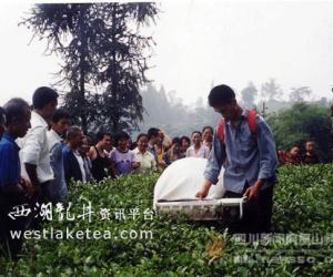 四川洪雅茶产业发展依托优势生态资源(图)