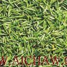 湘波绿茶的加工过程