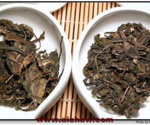 野生茶与栽培茶对比