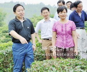 黄山市委书记王福宏实地调研祁门红茶(图)