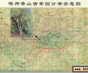 云南六大茶山图片