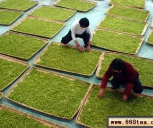 天目湖白茶――天目湖边的珍稀品种白茶
