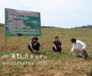 贵州思南县刷新思维 推进茶产业跨越发展