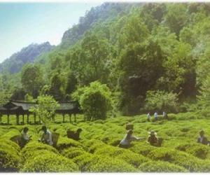 四川蒙顶山古老茶文化(图文)
