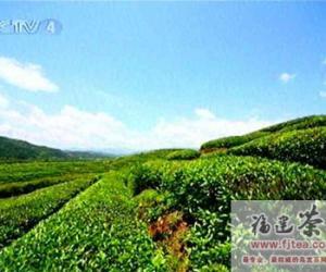 《武夷山茶文化》协拍侧记