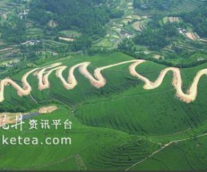 茶之梦--来自贵州茶业第一县湄潭的报道(图)
