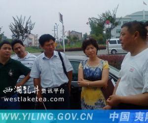 宜昌市民主党派人士重点调研夷陵区茶产业(图)