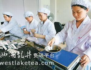 《武夷茶文化》热播引发大红袍销量上升(图)
