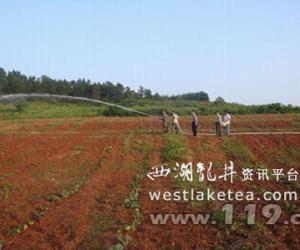 """贵州余庆:茶叶基地严重缺水 消防及时送""""救命""""水(图)"""