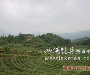 杨凌农高会为陕南茶业插上腾飞的翅膀(图)