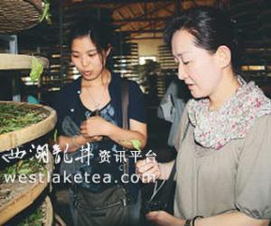 福建:政和茶叶知名度提高 吸引专家考察茶叶生产和茶文化