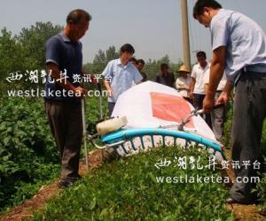 山东日照市机械采茶技术培训班在岚山区召开(图)