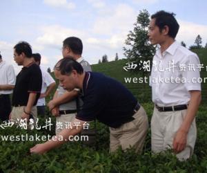 湖北省农业厅调研恩施州茶叶出口基地安全示范区建设