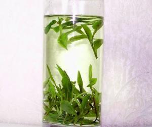 冲泡绿茶适合用什么茶具