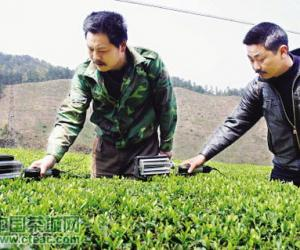 绍兴农民发明采茶机,1人可顶5人用(图)