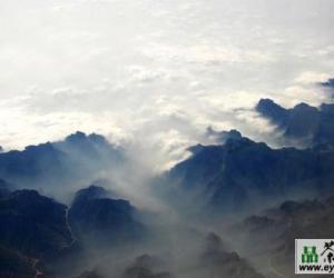 秦巴雾毫茶的产区环境