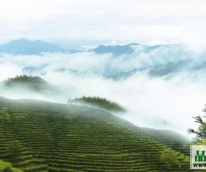 江山绿牡丹茶的产区环境