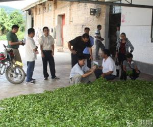 景洪市开展对茶叶初制所规范达标督促检查工作