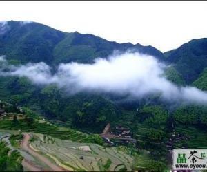 峨眉毛峰茶的产区环境