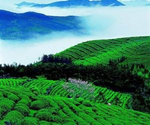 华顶云雾茶的产区环境