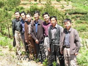 安徽省农科院拟在桐城建立多抗茶树良种选繁及绿色食品茶基地
