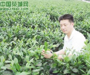 包小村:依靠科技振兴湘茶(图)
