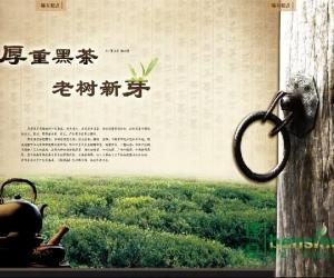 厚重黑茶 老树新芽