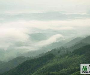 天山绿茶的产区环境