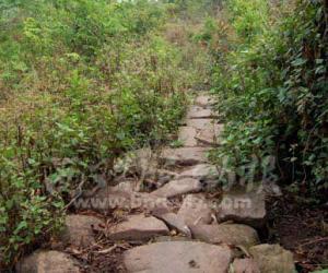 茶马古道的路面