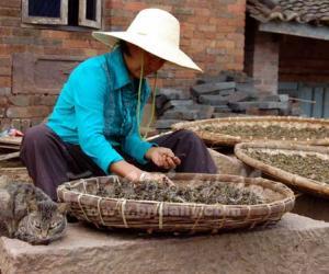 勐腊县象明乡健全茶产业服务体系