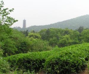 吃茶月漾苑 鉴泉太史湾