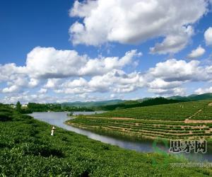 思茅区茶产业稳步发展