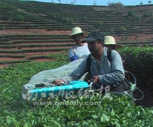 大渡岗茶场实现采茶机械化