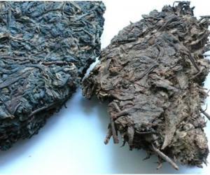黑茶真的是越久越香?破解天价古董茶的秘密