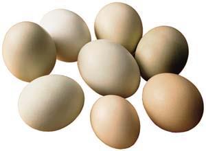 茶叶蛋的营养剖析(图)