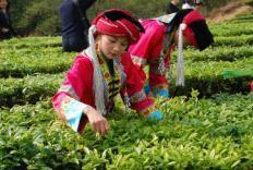 茶农――世界茶源的留守者