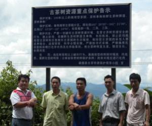 勐腊县开展古茶树资源保护行动
