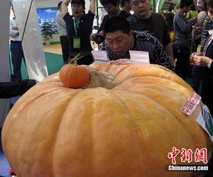 中国最大南瓜亮相中国农交会