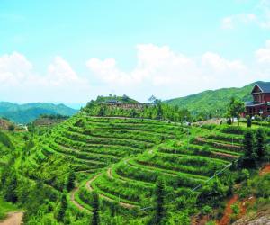 安溪茶业瞄准国际化大品牌目标,全面提升茶产业