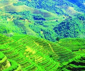 中国茶都十年大发展