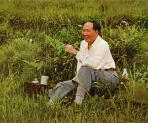 毛泽东的茶话逸事