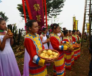 邦崴茶王节――举世既无双 尊为茶树王