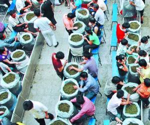 安溪茶2011年90亿元产值任务,五个致力建设