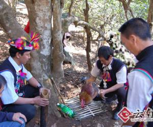 勐海茶王节祭拜茶树王仪式