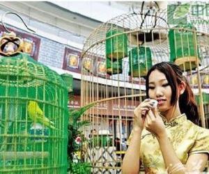 广州:普洱新茶上涨三成,黑茶有上扬的趋势(图)