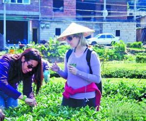 意大利茶叶协会成员到安溪县了解铁观音秋茶销售情况